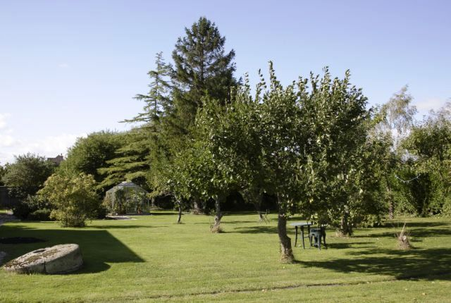 A view across the orchard